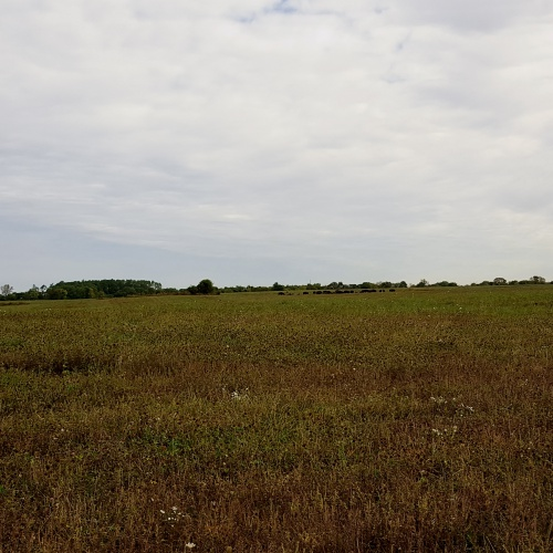 AP Environmental Science field trip to Midewin Tallgrass Prairie, 09.27.2017
