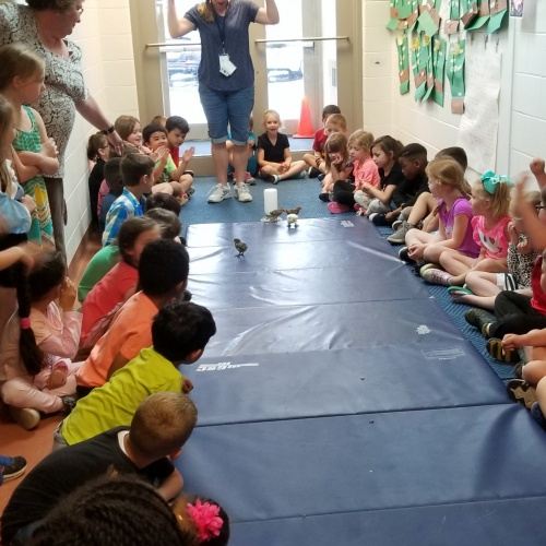 Kindergartners study life by watching chicks hatch, May 2018