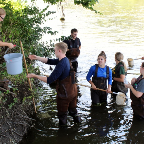 Macroinvertebrates study in DuPage River, 08.23.2018