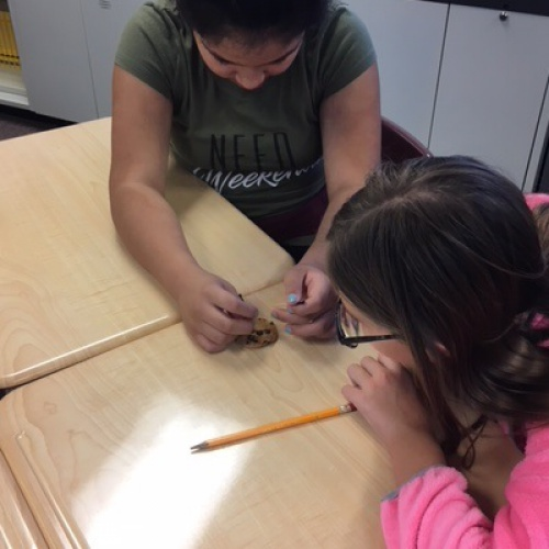 Sixth graders use cookies to think like archeologists