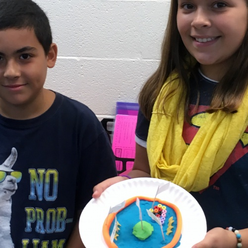 Fifth graders create animal, plant cells, 09.05.2018