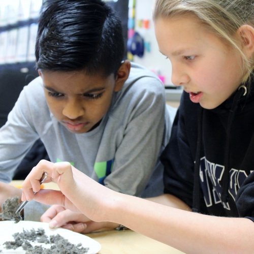 5th grade honor students look for bones in owl pellets, 02.19.2019