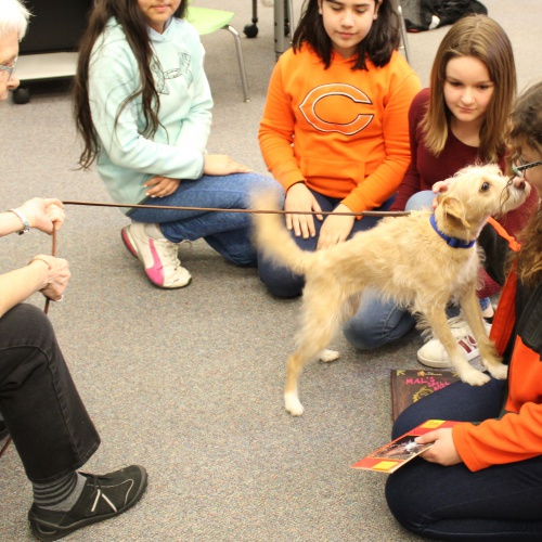 Therapy dogs visit students, 03.19.2019