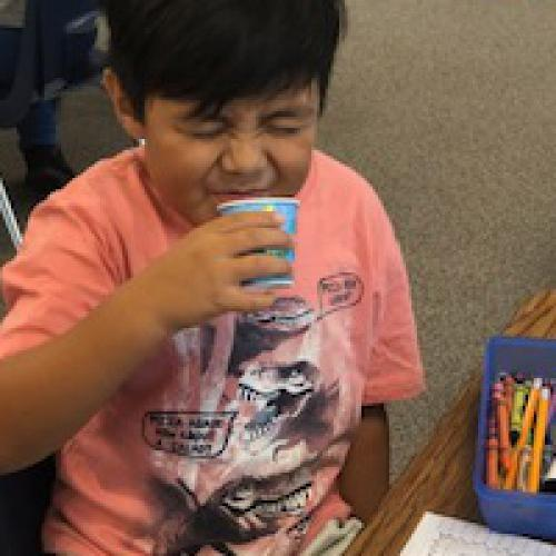Bilingual kindergarten learns about five senses with apples