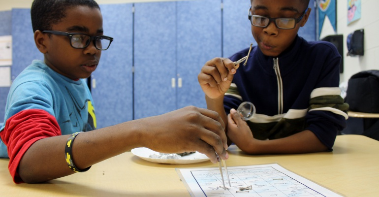 Charles Reed Elementary School students study owl pellets, December 2019